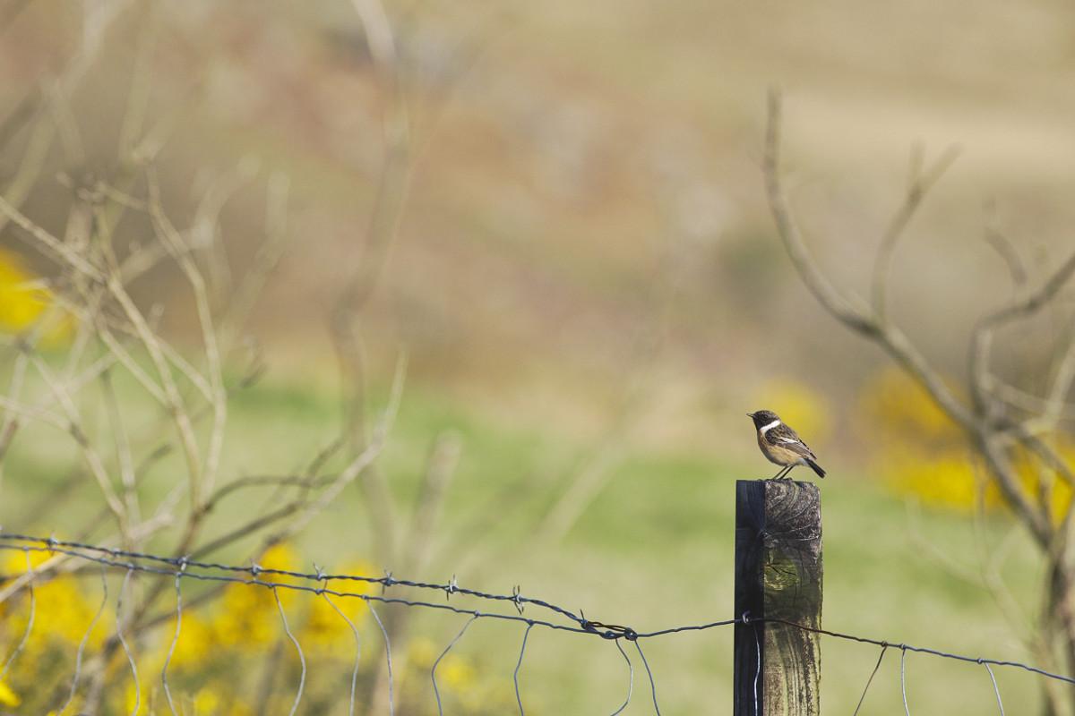 Bird Ringing Camp Italy  Alps